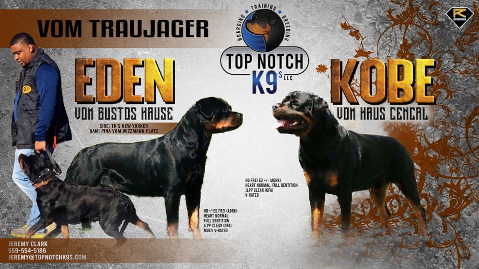 top notch k9s rottweiler upcoming litter eden kobe fresno california german